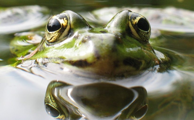 What is your boiling frog problem?